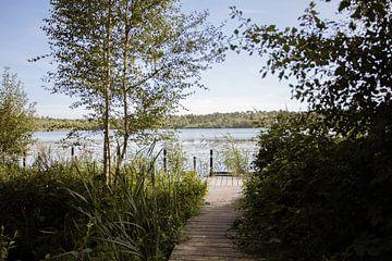 Forêts néerlandaises typiques sur Angela Kiemeneij