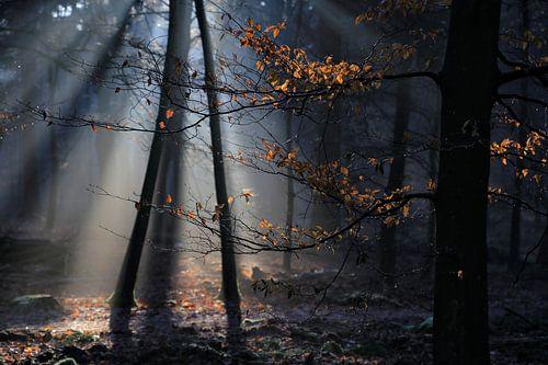 Zonnenstralen von Patrick Brouwers