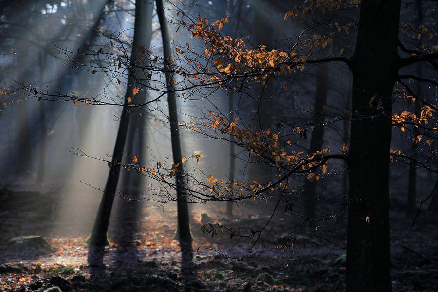 Zonnenstralen van Patrick Brouwers