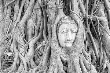 Boeddhabeeld in een boom in Ayutthaya van