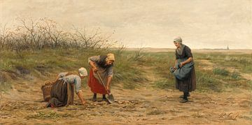Frauen aus Scheveningen lesen ein gerodetes Kartoffelfeld, Philip Sadée
