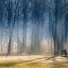 TAKE A SEAT DELFTSE HOUT van Gerhard Nel