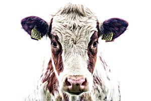 Portret van een nieuwsgierige koe van