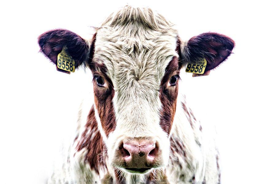 Portret van een nieuwsgierige koe
