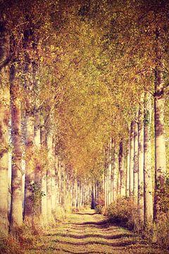 novemberwalk in de Zak van Zuidbeveland von Els Fonteine