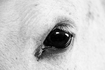 Paardenoog von Marieke Borst