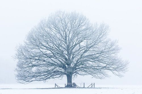 Winterboom van