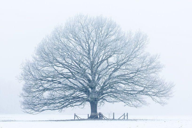 Winterboom van Ronald Kamphuis