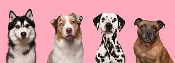 Vier knappe honden portretten van Elles Rijsdijk
