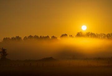 Mist van roeland scheeren