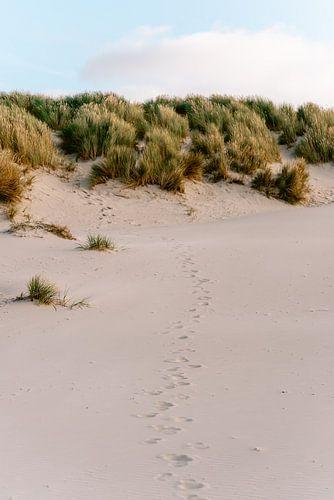 Voetstappen in het zand || Strand van Midsland aan zee, Terschelling (Nederland)