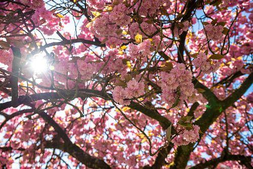 Bloesem boom roze van Lisa Berkhuysen