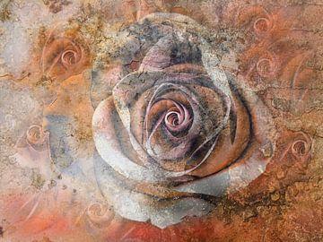 voorbijgaande rozen van Claudia Gründler