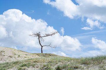 Eenzaam boompje bij Westenschouwen van Laura Loeve
