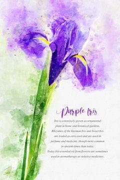 Paarse Iris van Theodor Decker