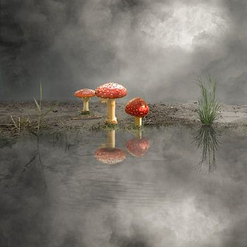 Pilze von Cora Deutekom