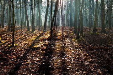 Waldgesicht mit schwachem Sonnenlicht. von Henk Elshout