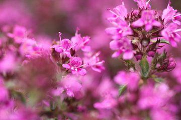 Paarse bloemen van Ruud Wijnands