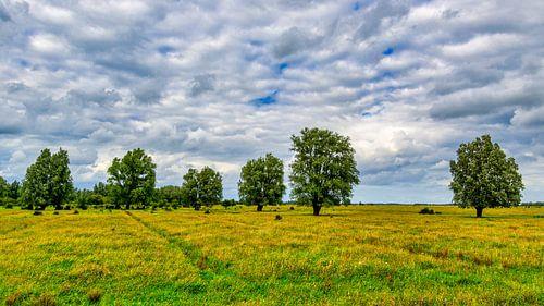 Zes vrijstaande bomen in weiland
