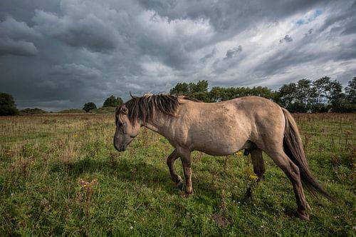 paard in de wei.