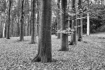 Bomenrij. Beerschoten, De Bilt (NL) van Sjaak den Breeje