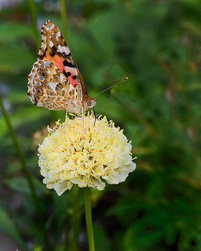 Fritillary auf einsamer gelber Blüte von Marly De Kok