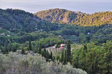 Grieks landschap op Samos von Marije van der Vies