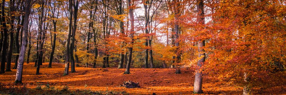 Herfstkleuren in overvloed van Marcel Pietersen