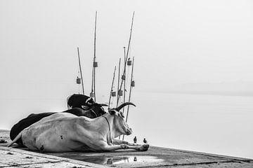 Heilige koeien in India van Thea Oranje