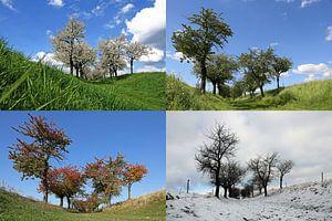 Vier Jahreszeiten van