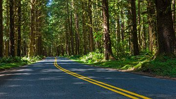 Eine Straße zum Regenwald von Hoh im Olympic National Park