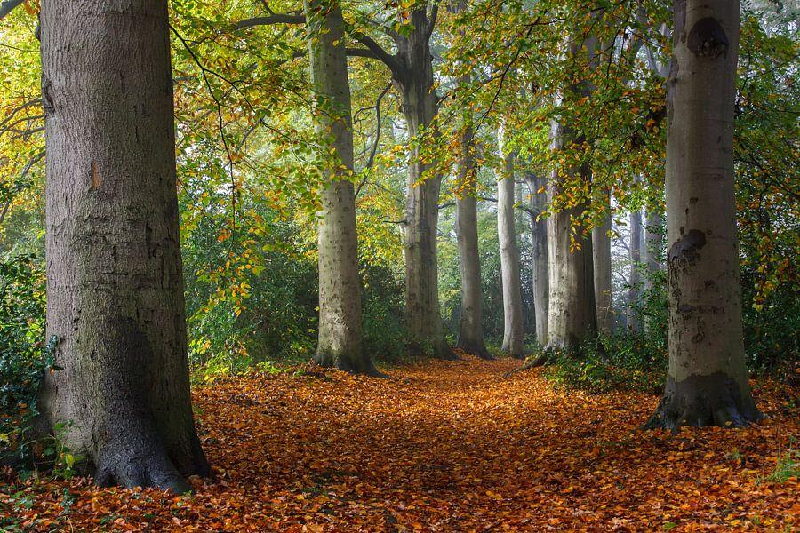 Herfst van Pim Leijen