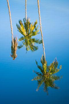 Gespiegelte Palmen von Pieter Tel