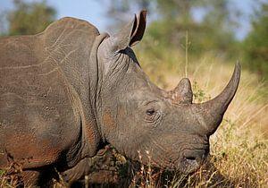 Rhino - Africa wildlife van W. Woyke