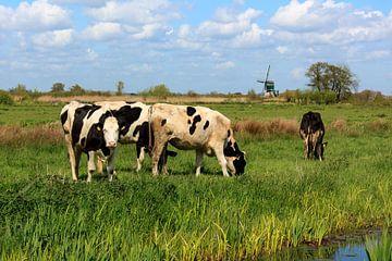 Koeien in het veld van Stephan Neven