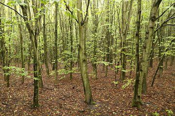 Een jong bos van Ewan Mol