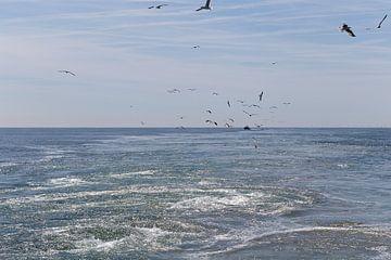 De Noordzee van