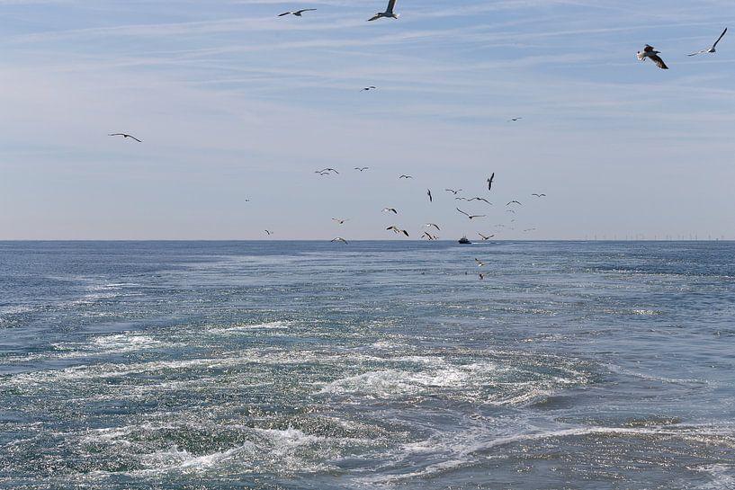 De Noordzee van Miranda van Hulst