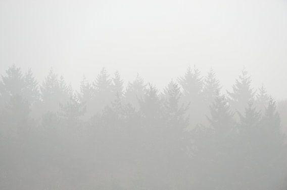 Bomen gehuld in de mist van Merijn van der Vliet