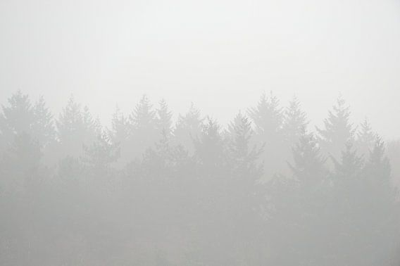 Bomen gehuld in de mist