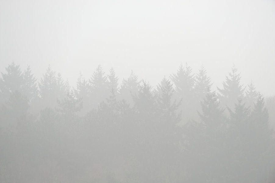Bomen gehuld in de mist von Merijn van der Vliet