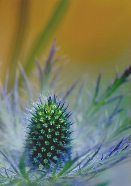 Stekelig blauw van Marlies Prieckaerts