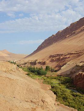 Oase in de woestijn van Jildau Schotanus