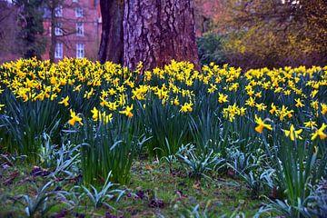 Narcissusbloem van Edgar Schermaul
