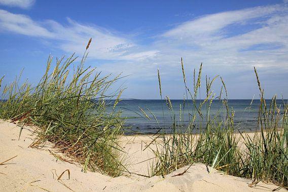Sommer an der Ostsee van Ostsee Bilder