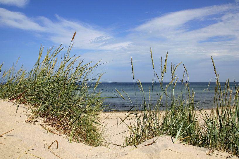 Sommer an der Ostsee von Ostsee Bilder