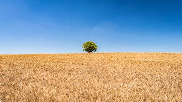 Eenzame boom in een graanveld ergens in de Provence. van Harry Kors
