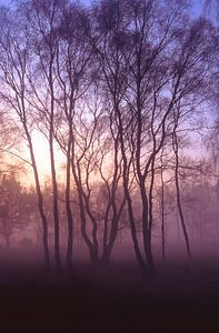 Strabrechtse Heide 173