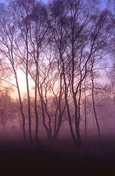 Strabrechtse Heide 173 sur Desh amer