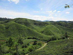 Cameron Hochland - Malaysia von Fotograaf Jelle